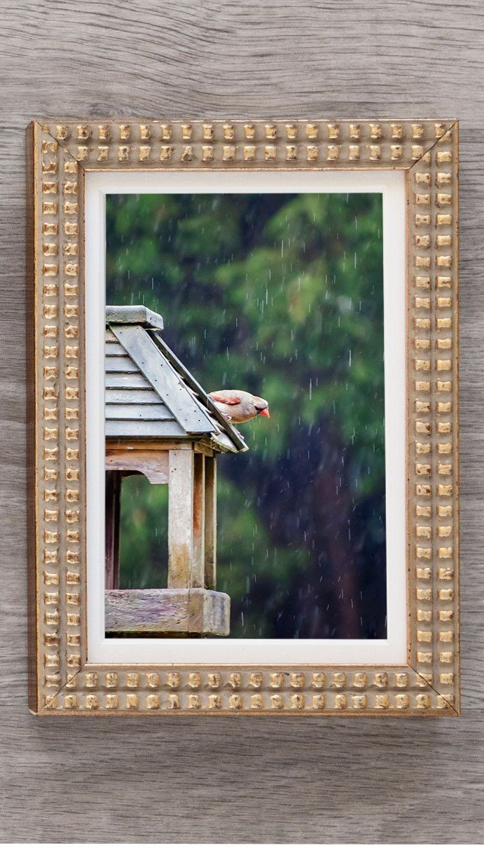 female cardinal on birdhouse in elegant gold frame
