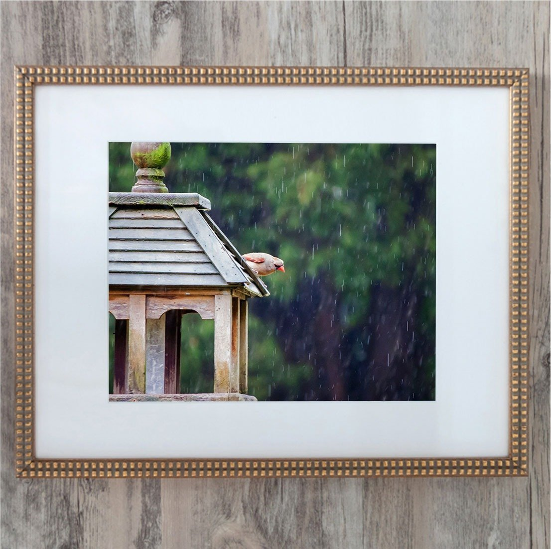 female cardinal in the rain elegant gold frame