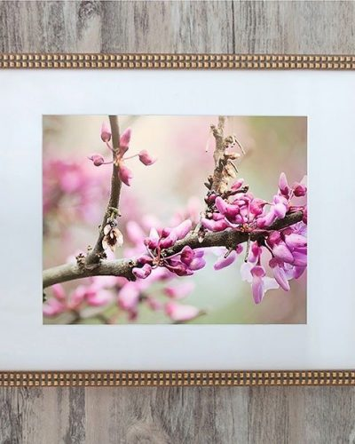 easten redbud bloom in gold frame with square moulding amsw photography