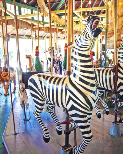 Carousel Zebra photo