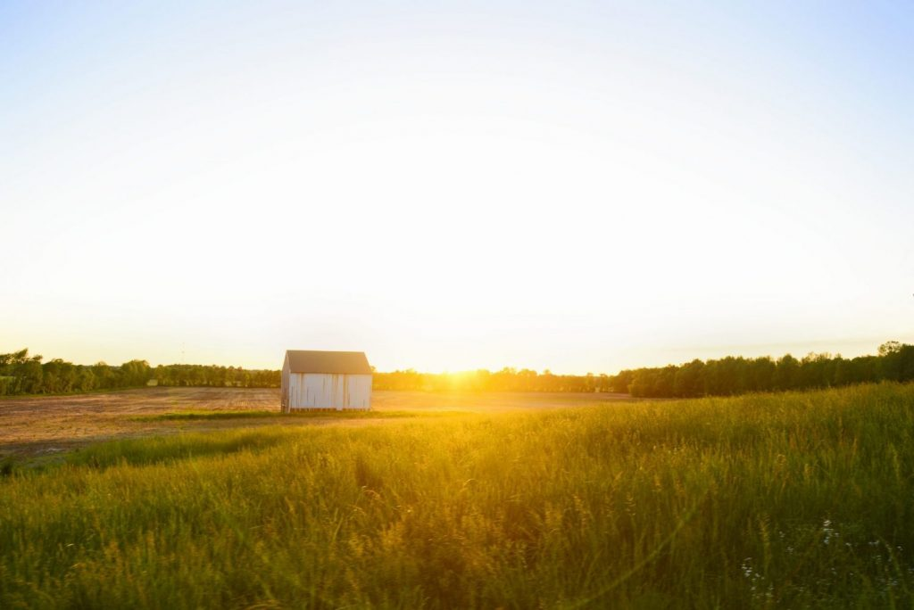 rustic wall art photo of white barn in field with golden light