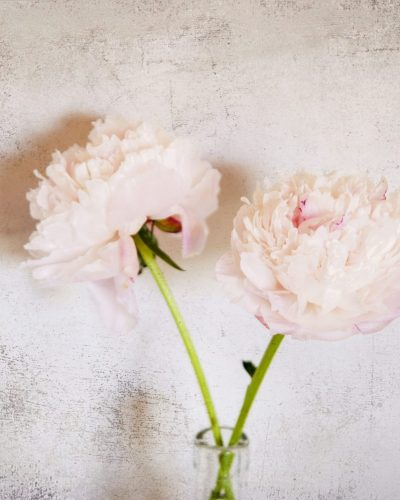 two pink peonies in a vase with textured background