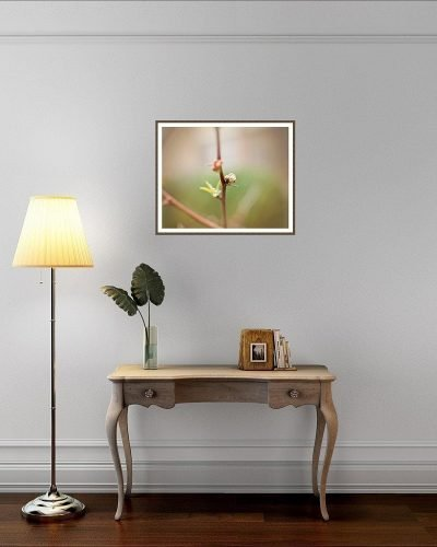 framed fine art nature and landscape limited edition prints pinks and greens