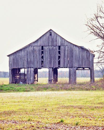 tobacco barn in Kentucky field Mason's barn white border print